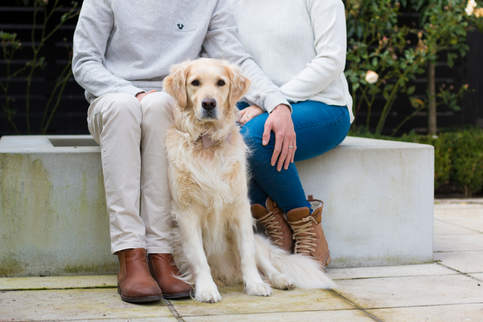 Sage - Golden Retriver Dog