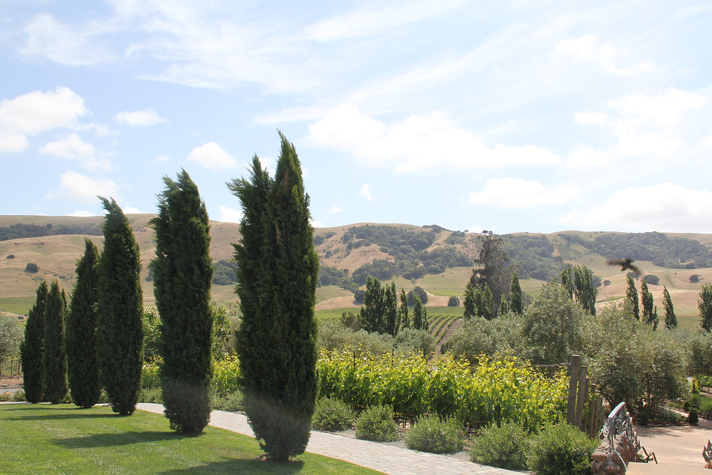 Picture of Sonoma Valley in the summer
