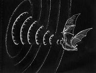 C-Bat-by-Simon-Crowhurst.jpg