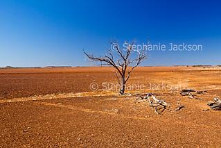 outback landscape to_diamantina - IMG 84