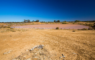 dam and sheep skeleton during drought - IMG