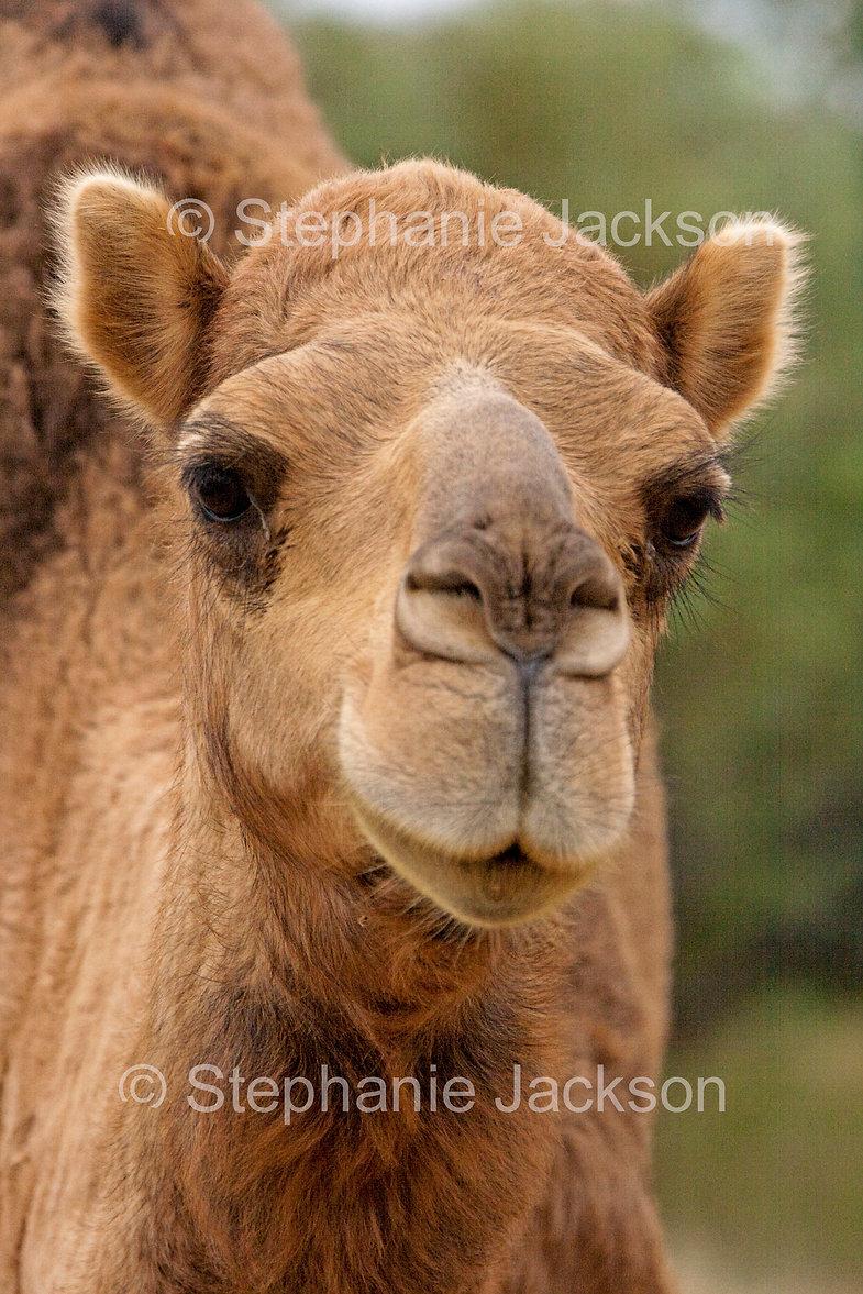 Camel_MG_5194.jpg