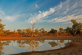 Outback waterhole near Charleville in Queensland, Australia - IMG 1854