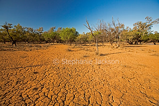 cracked ground during drought at currawi