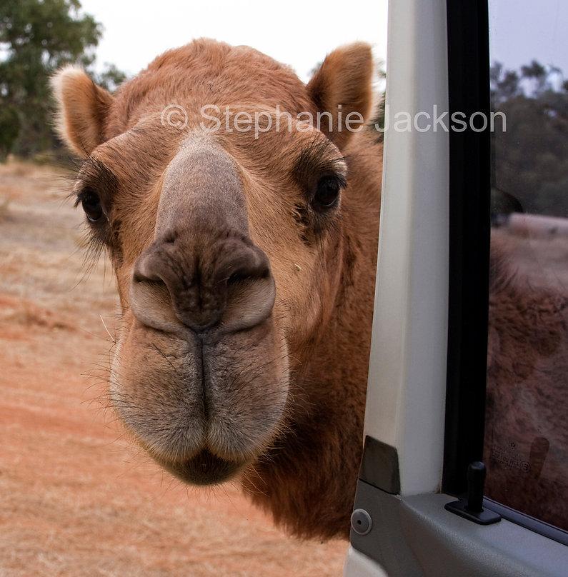Camel_MG_5196.jpg