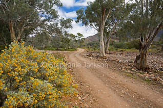Outback road in Gammon Ranges National Park, South Australia - IMG 9375