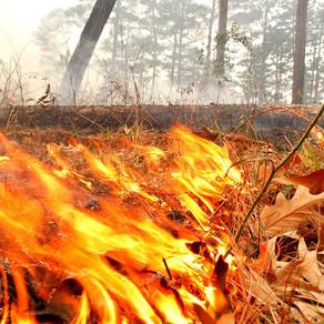 Ohio DNR and Ohio EPA Restrict Open Burns