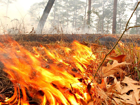 Ohio DNR and Ohio EPA Restrict Open Burns
