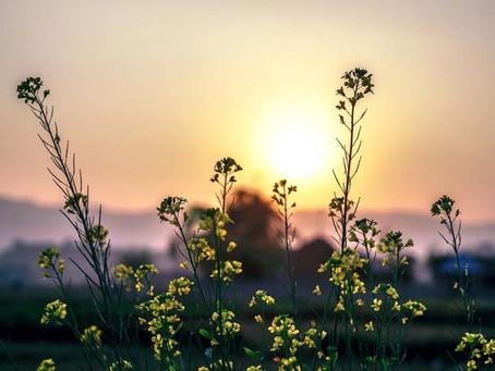 La petite oubliée des médecines naturelles: Testez la naturopathie!