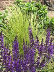 van der rhee, outdoor design, tuinontwerp, beplantingsplan