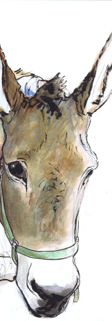 Portrait Fille et âne