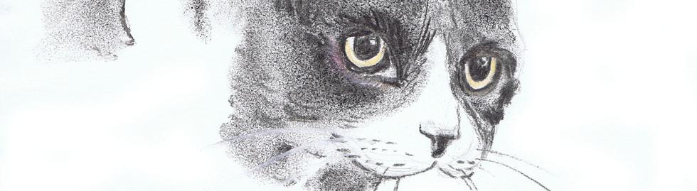 portrait chat fusain noir et blanc