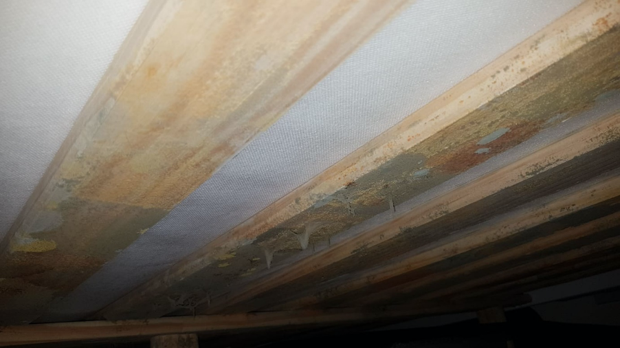mould dripping from ceiling