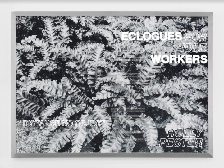 'ECLOGUES FOR IDLE WORKERS' 'HOLLY PESTER' imprinted upon monochrome plants