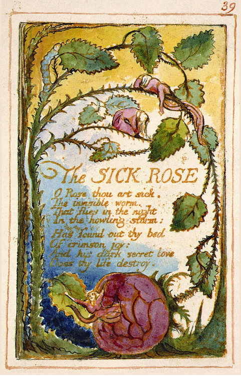 A reproduction of William Blake's 'The Sick Rose' poem with illustrations of thorned rose branches, some looking wilted