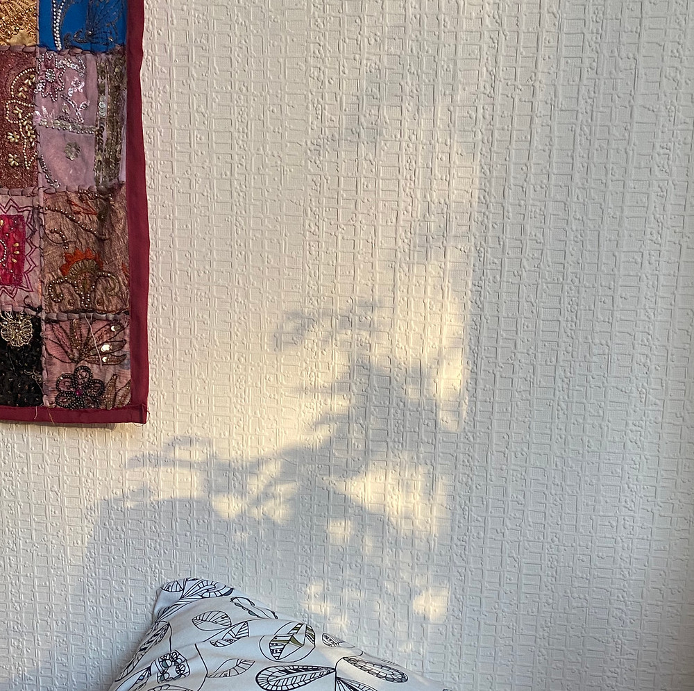 reflection of plant silhouette on wallpapered wall