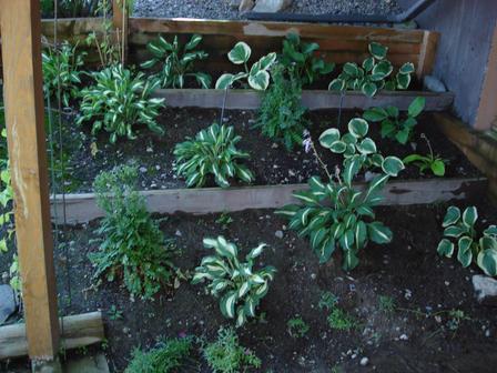 Korpi Seasonal Planting