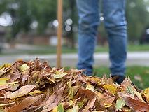 leaves-4684224_1920.jpg