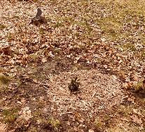 sues Trees 2.jpg