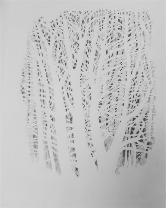 Tree Drawing. 28.5 x 20.5cm, graphite pencil on cartridge paper