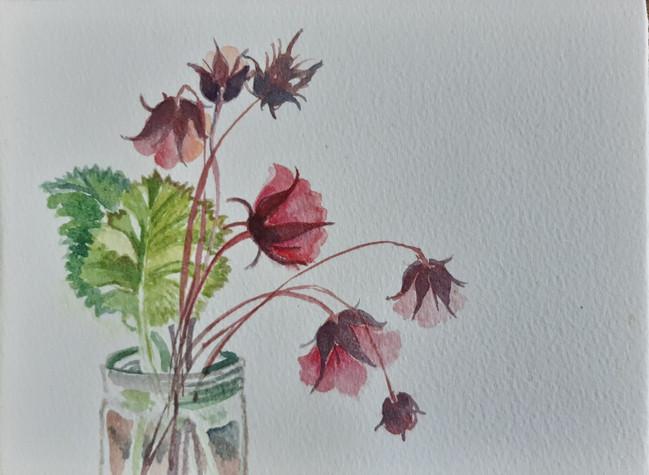 Geum 2. 14 x 19cm, watercolour