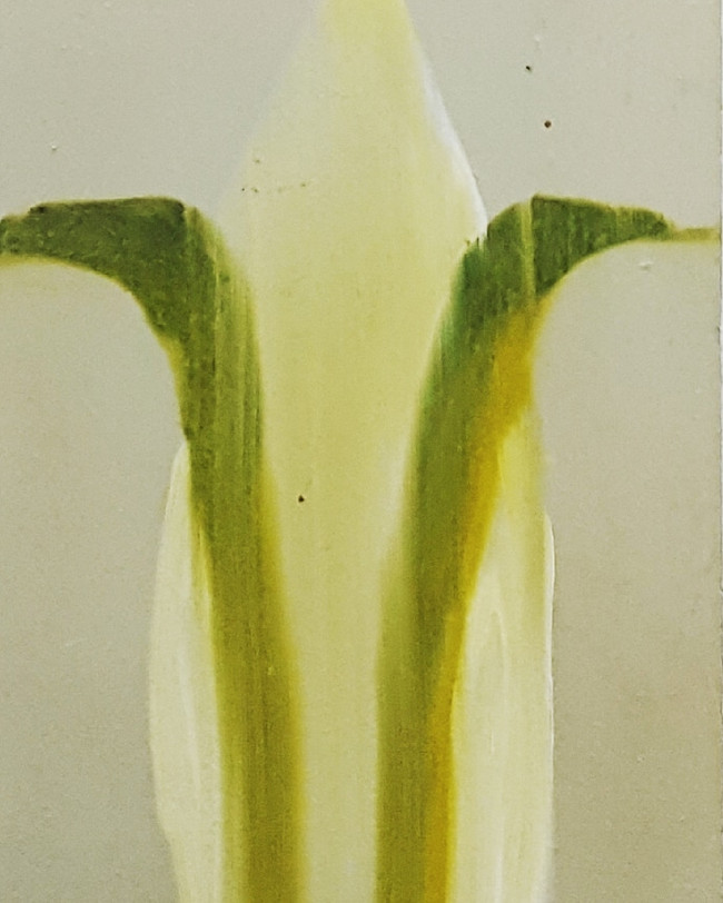 Plant Form. 17.8 x 12.7cm, oil on board
