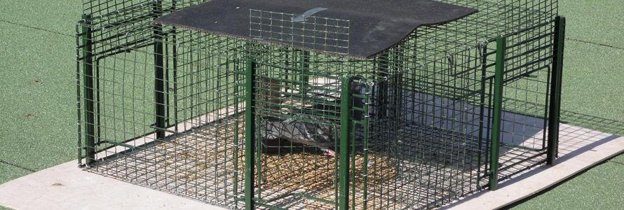 cage à capture pour pigeons