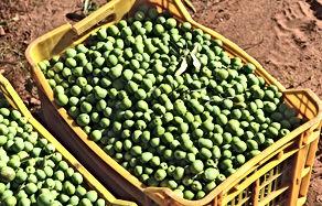olives-3803129_edited.jpg
