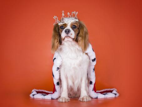 英王室チャールズ皇太子、父の厳しさに苦労?!