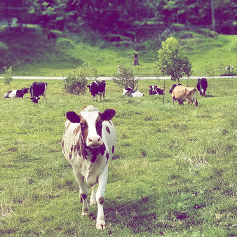 Brookby Farm