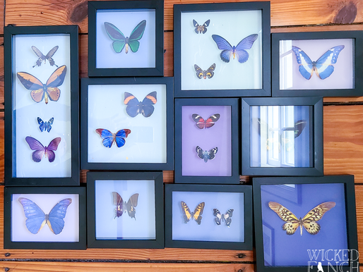 DIY Faux Taxidermy Butterfly Wall