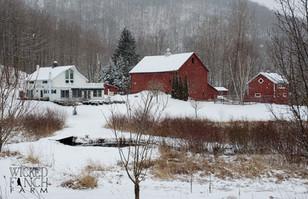 Wicked Finch Farm Winter