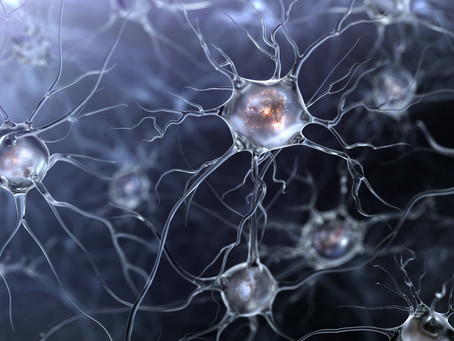 Why is Neuroscience interesting?