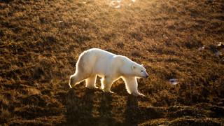 Polar Bear Capital / Discovery Kids