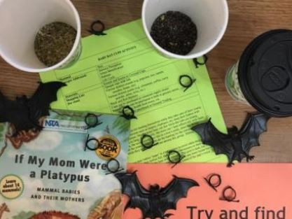 baby bat cups STEM activity share my lesson science naturally platypus media