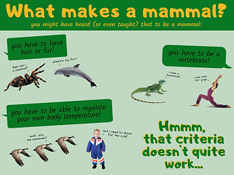 What makes a mammal_.png