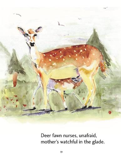 Deer English.png