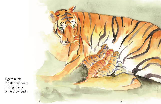 Tigers English.png