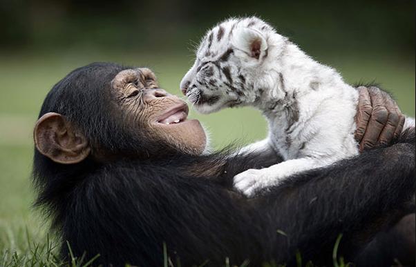 science naturally animal human relationships mammals breastfeeding