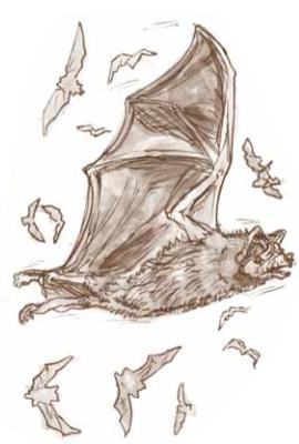 bats bat bat appreciation day mammals science nature early education