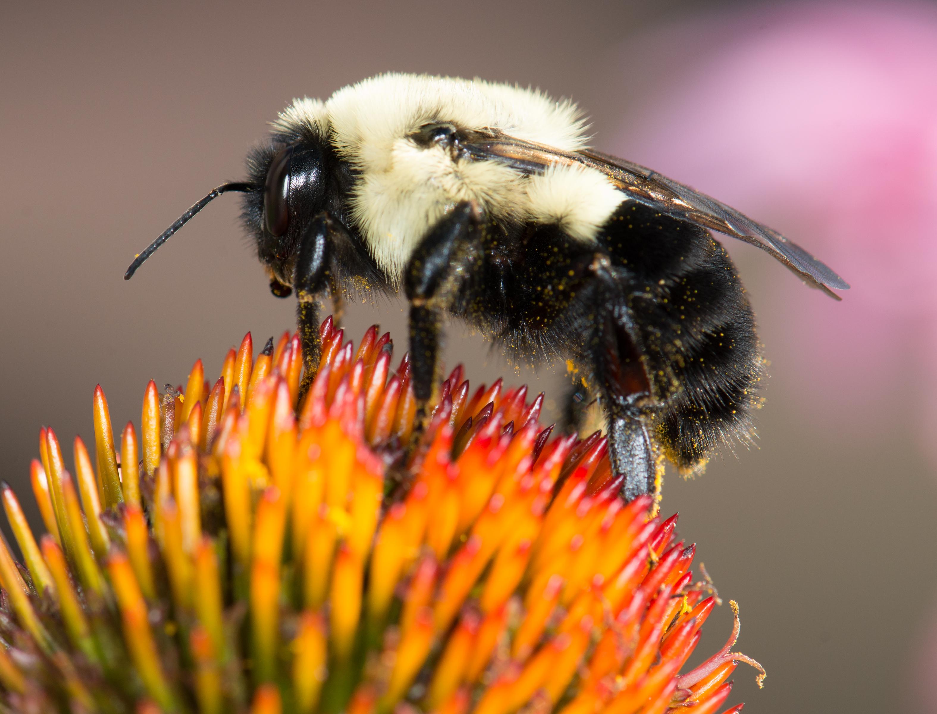 BEE--DSC_9270