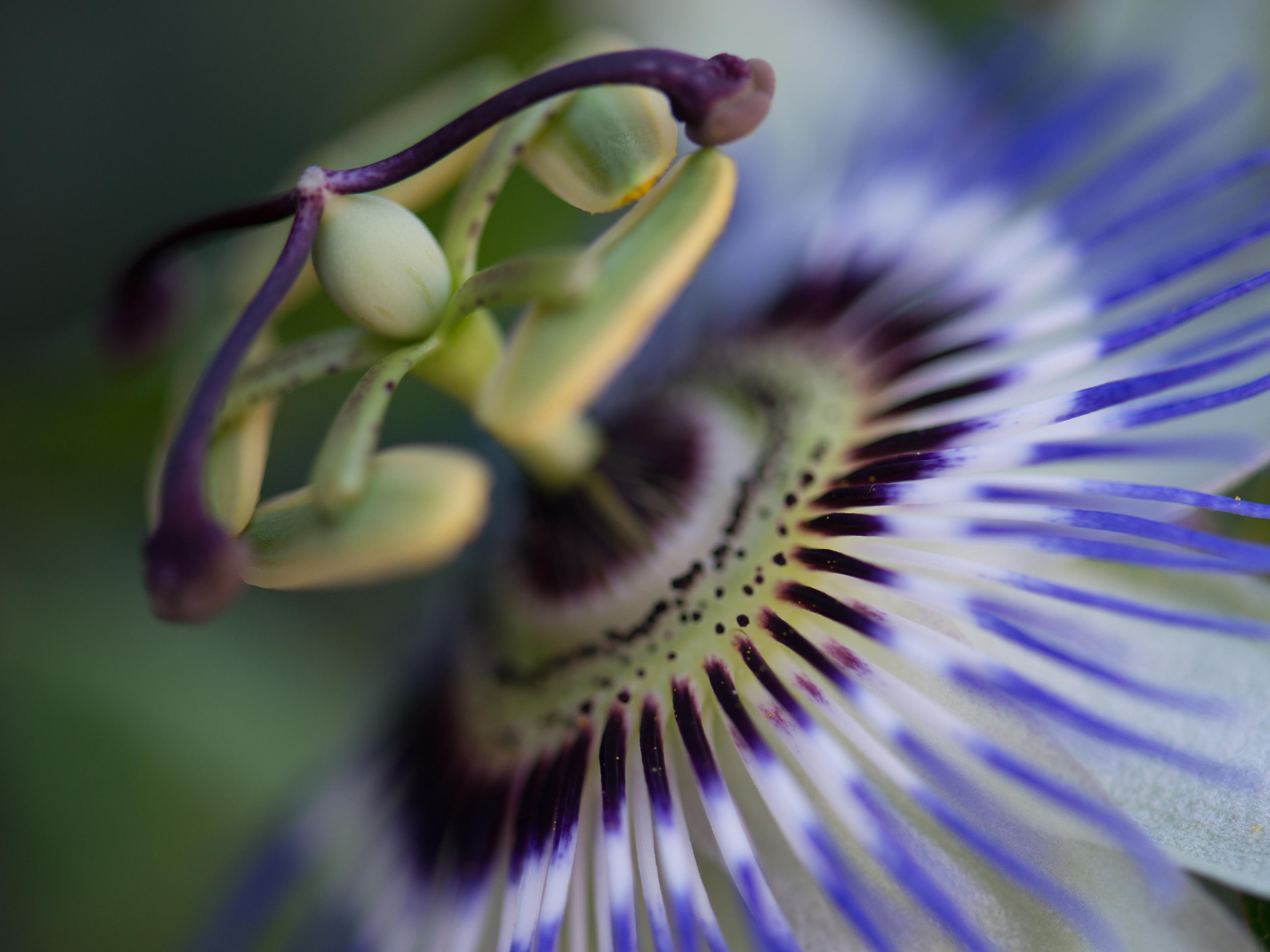 Closeup-BudDSC_3936