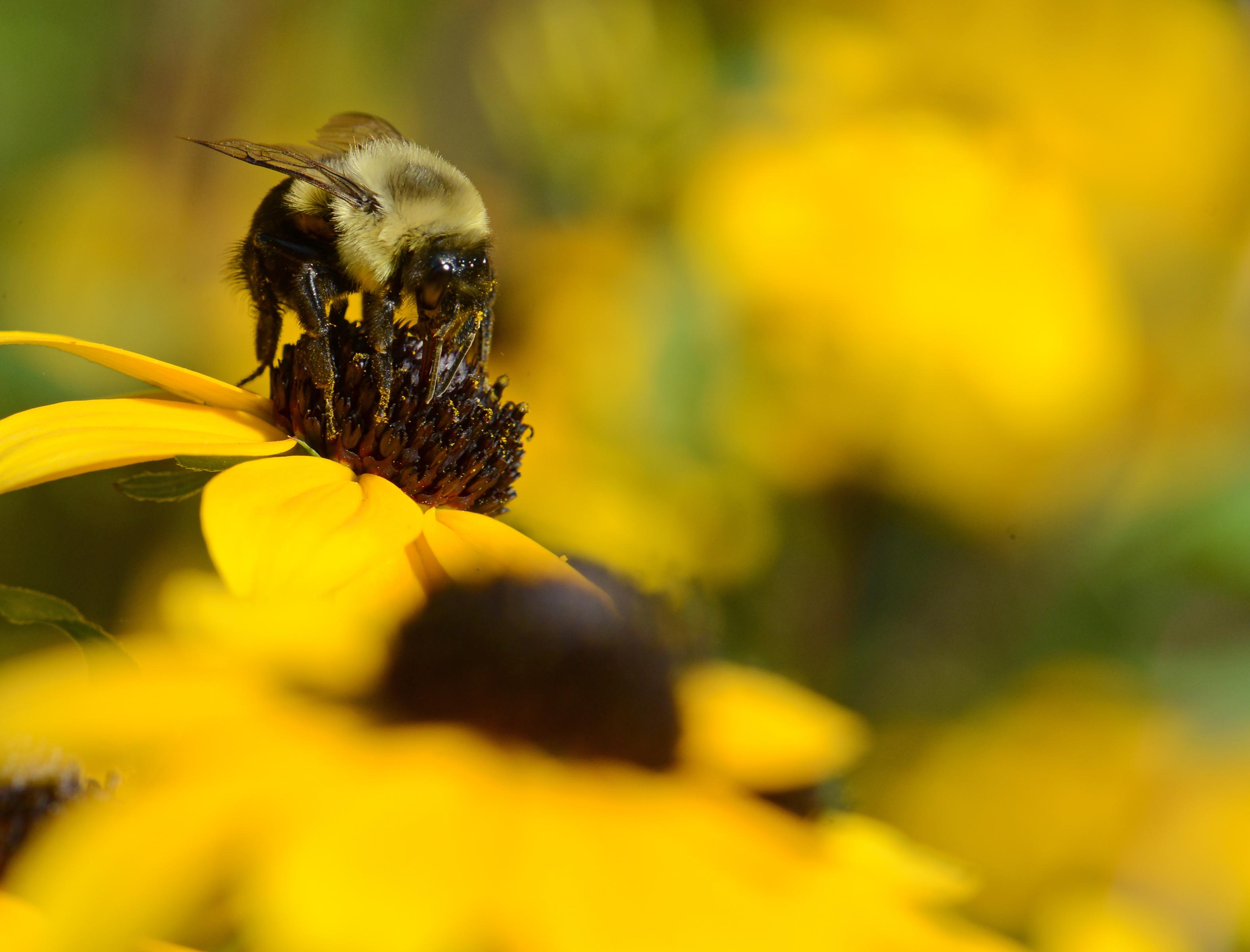 Bee-DSC_9258