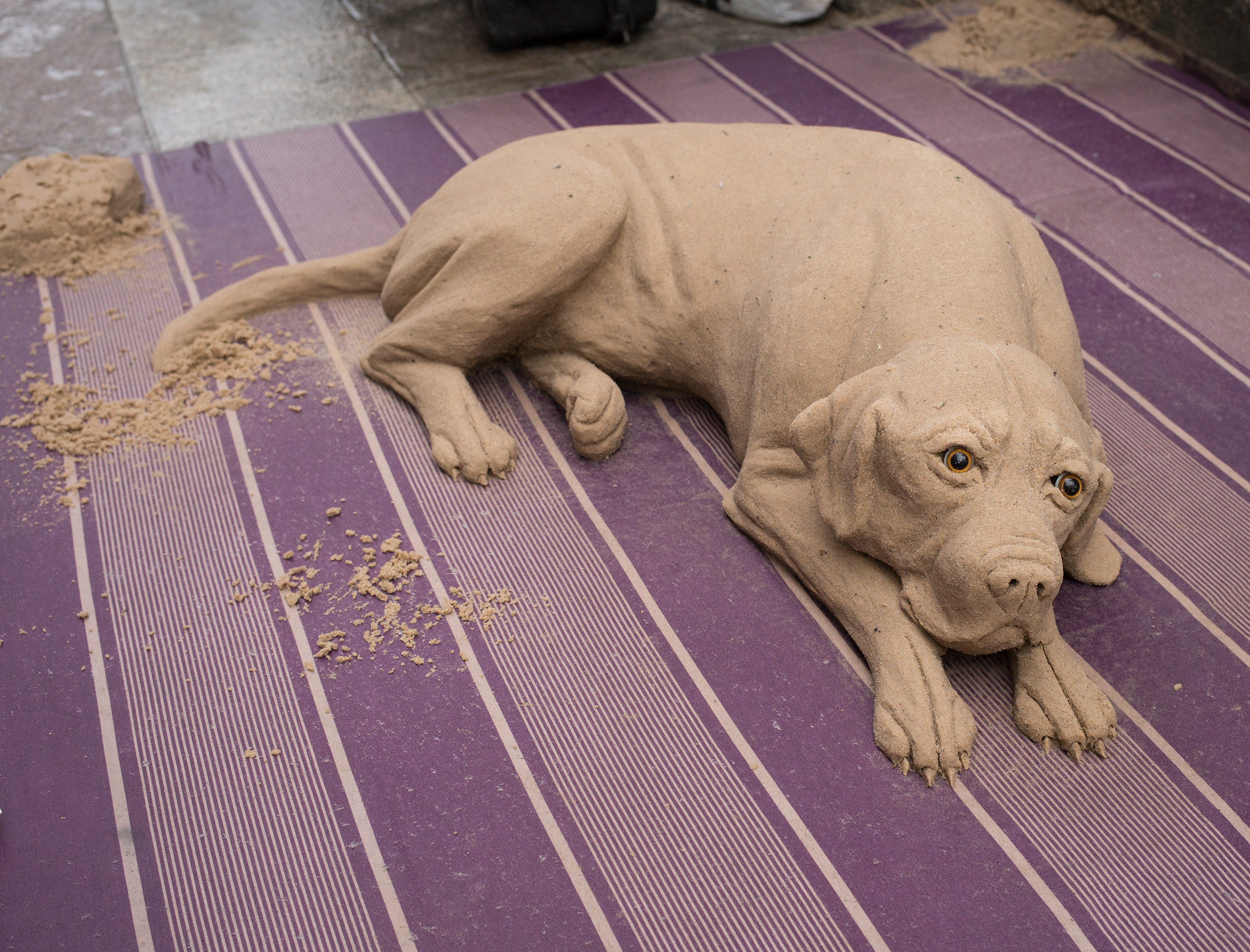 Sand-Dog-L1005714