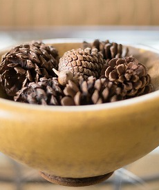 The Restful Pine Cone