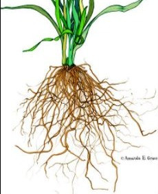 Autumn Gardening - It's All About The Roots!
