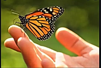 butterly on hand
