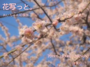 2019 6/28 fri -6/30 sun お写ん歩ぐらふぁーあいちゅん写真展「花写っと。」