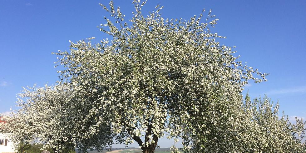 Frühlings Seelenwellness Retreat