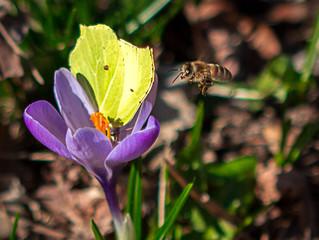 Un début de printemps